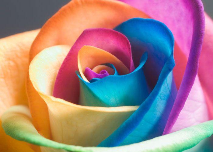 Lizza in fiore